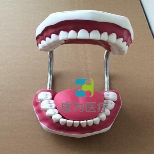 """""""康为医疗""""牙护理保健模型(放大五倍)"""