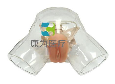 """""""康为医疗""""透明女性导尿模型"""