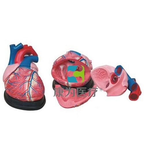 """""""康为医疗""""大心脏解剖模型"""