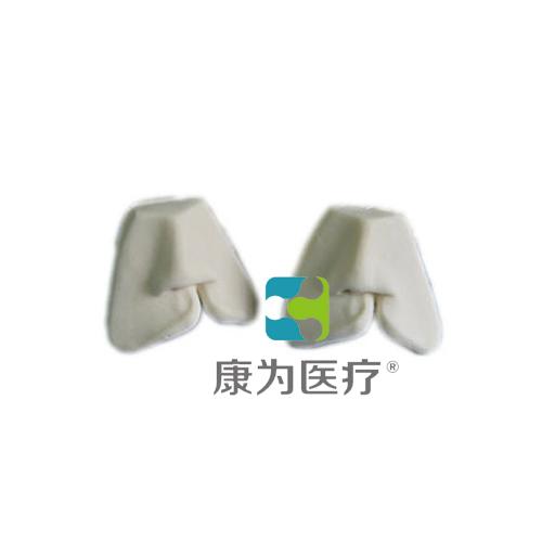 """""""康为医疗""""唇裂缝合模型"""
