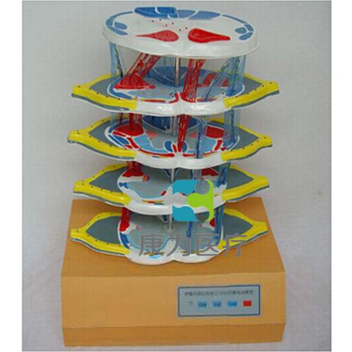 """""""康为医疗""""脊髓的内部结构和上、下行纤维电动模型"""