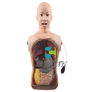 """""""康为医疗"""" 高级鼻胃管与气管护理模型"""