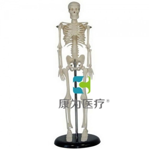 """""""康为医疗""""45CM人体骨骼模型"""