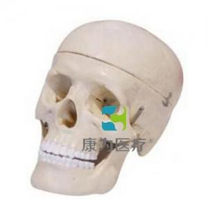 """""""康为医疗""""学生用头颅骨模型(二部分)"""