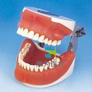 """""""康为医疗""""口腔外科综合实习模型"""