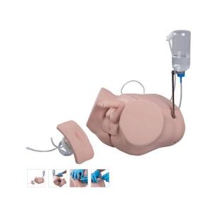 德国3B Scientific®专业版导尿训练模型组合